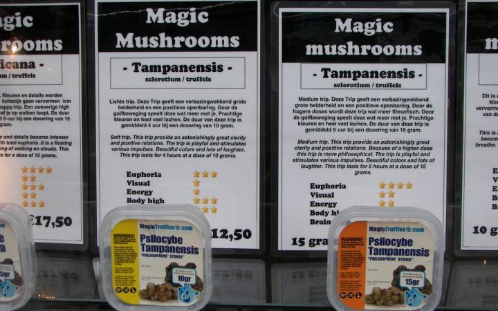 Magic mushroom varietals being sold legally in a Dutch 'smart shop'