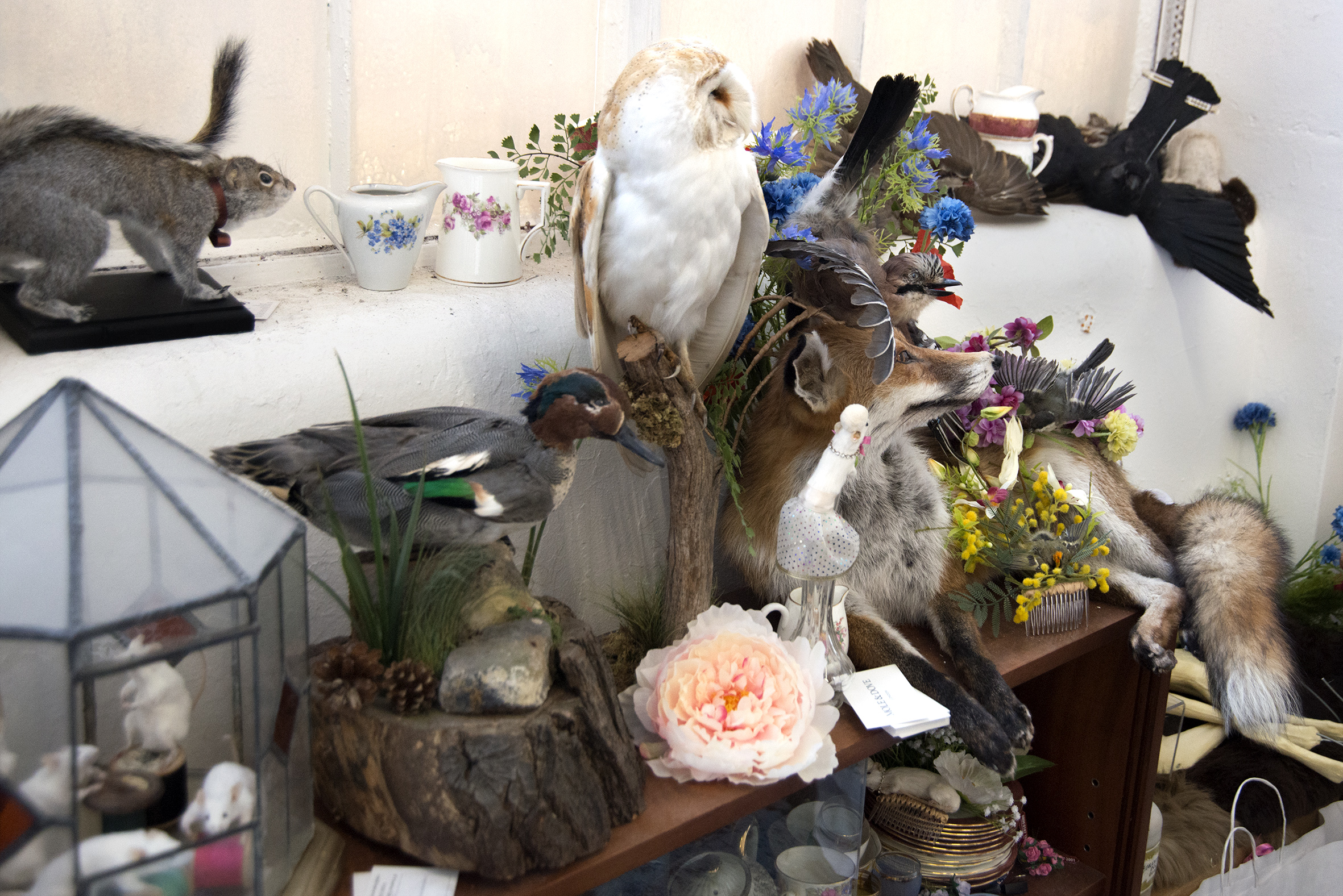 taxidermy_women_ethical_sammy_cockhill_sarah_keen_mole_dove_curious_menagerie_