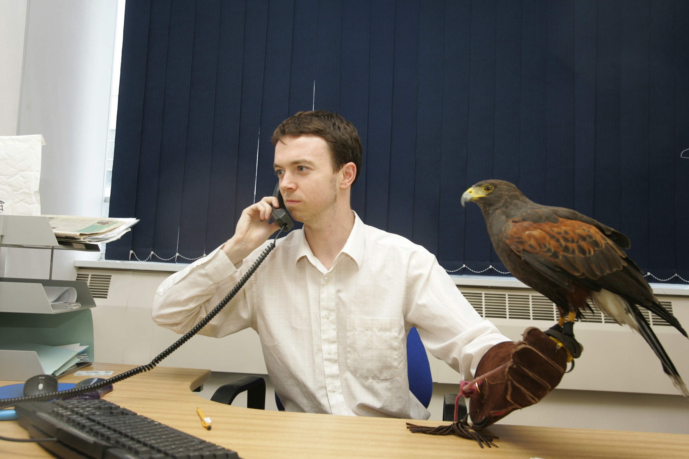 Office worker with a hawk