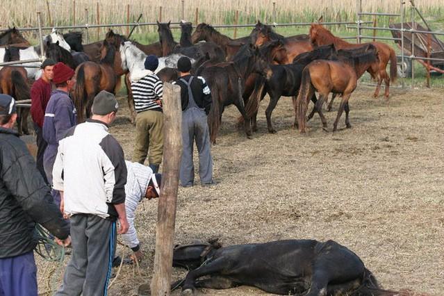 Letea Horses