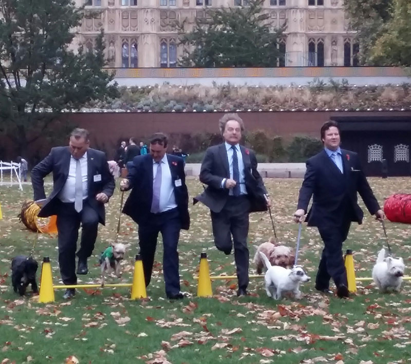 Dog owning MPs with their pooches