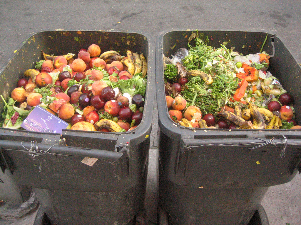 Waste food in bins