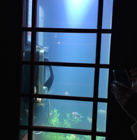 London's iconic telephone box filled with water and exotic fish. Photo by Tania Beck