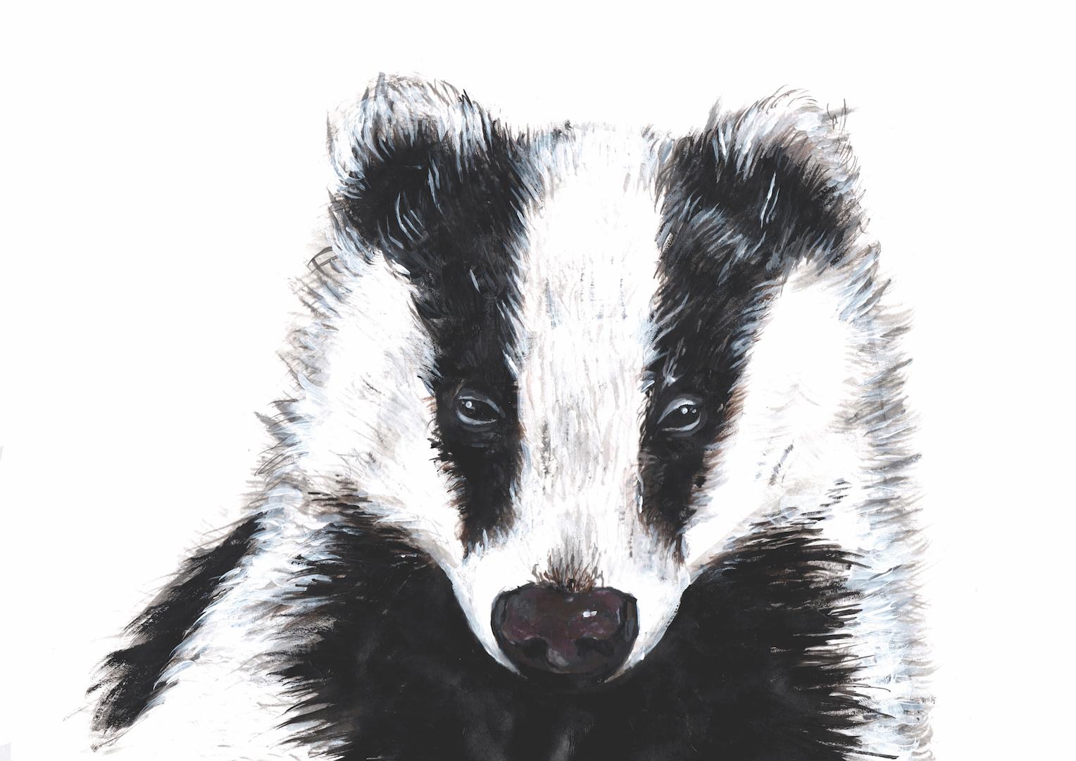 Illustration of a Badger