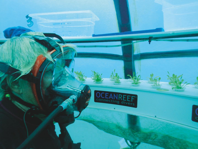 Farming underwater