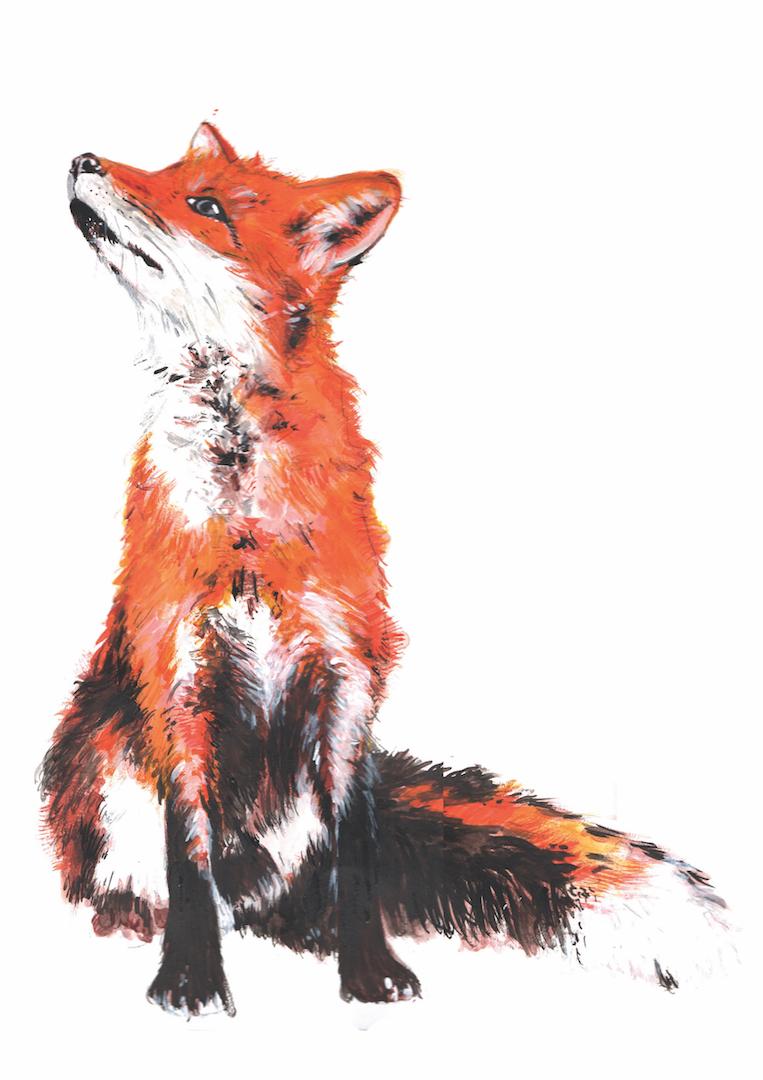 Capital wildlife- fox