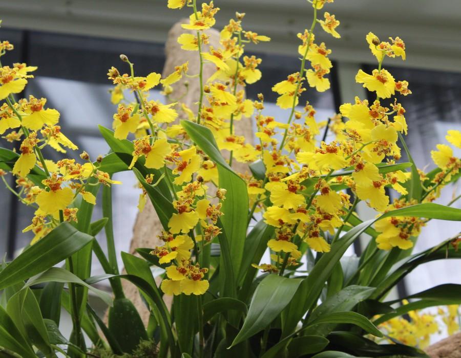A range of flowers