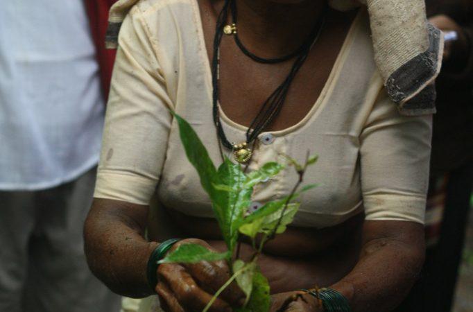 A farmer, Adi, with a seedling