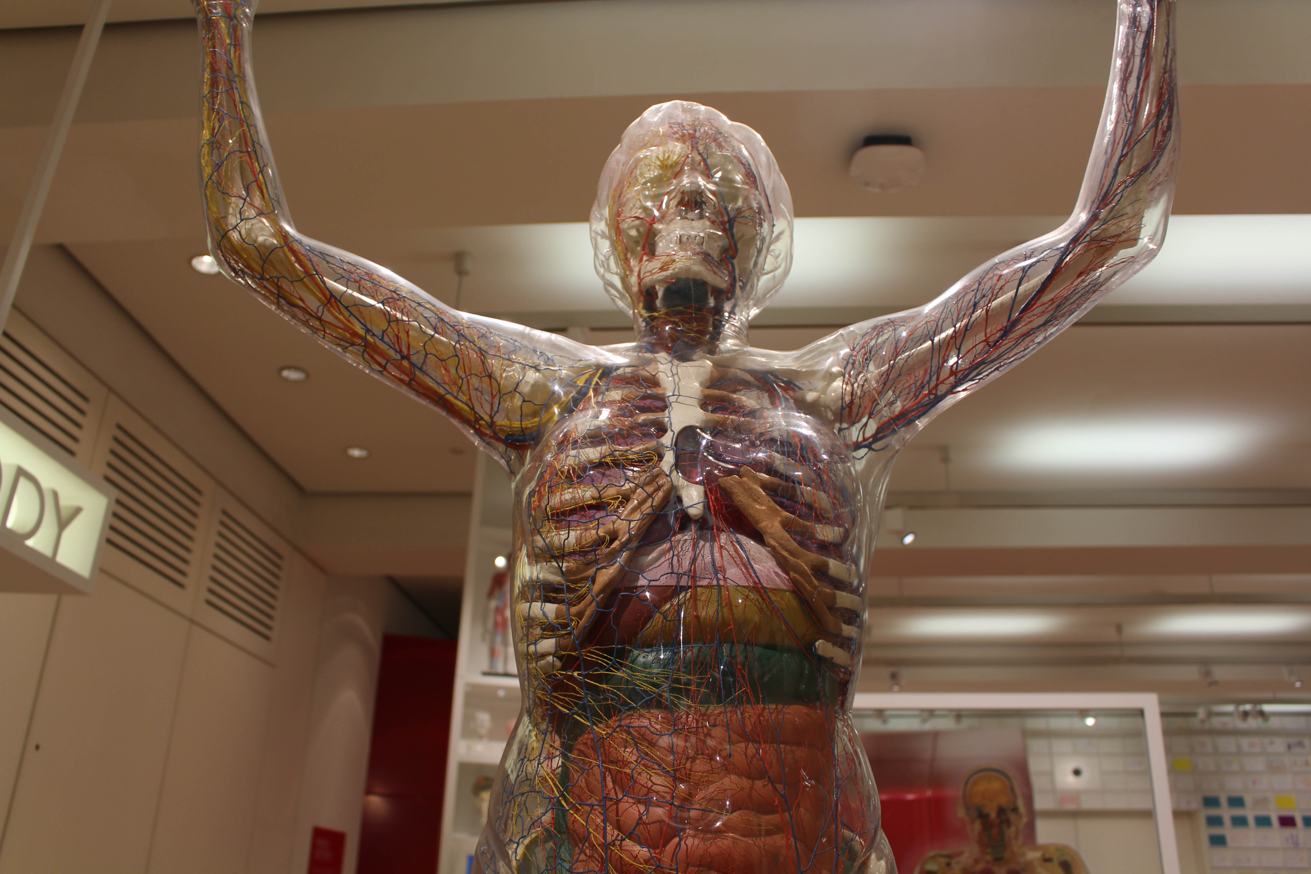 The Medicine Now exhibition at the Wellcome Trust