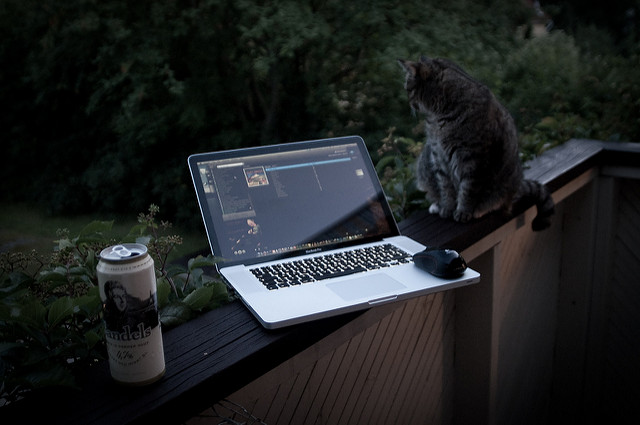 Laptop and cat