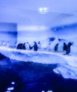 Penguin Exhibit Sea Life