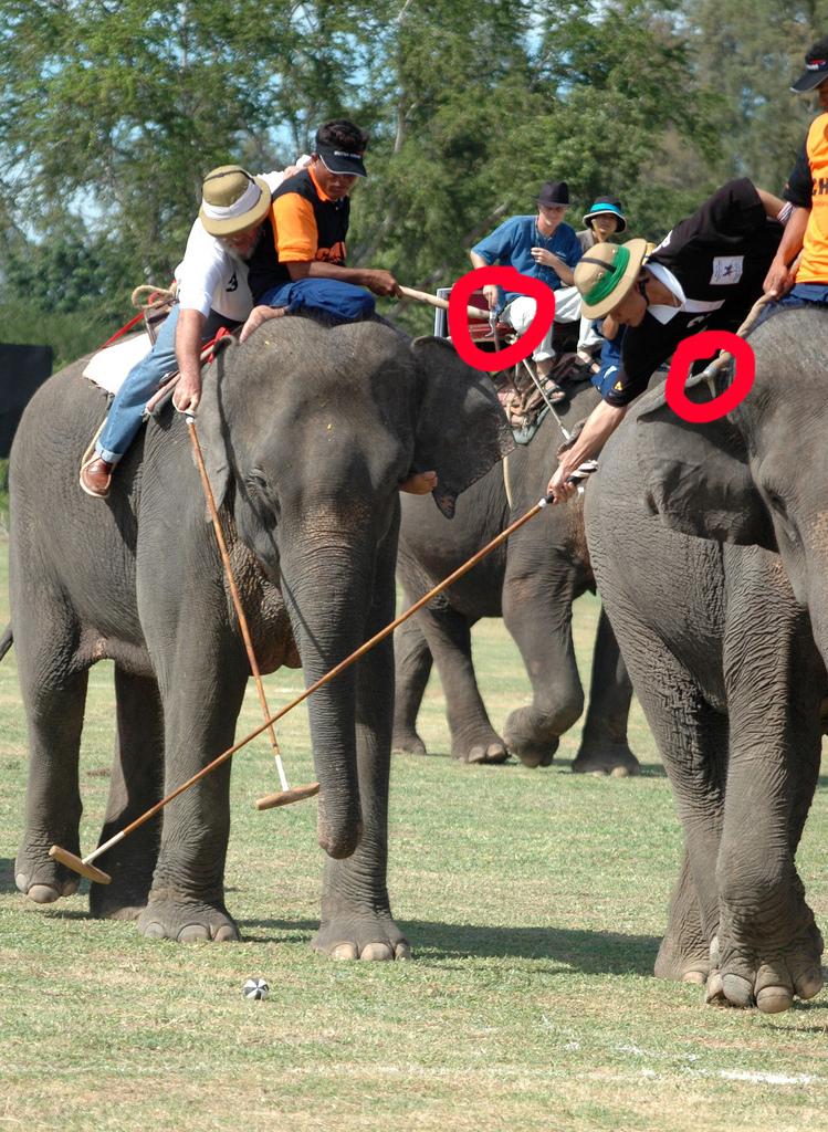 elephant Polo bullhooks