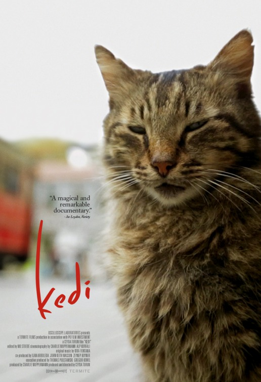 Courtesy of Kedi Film