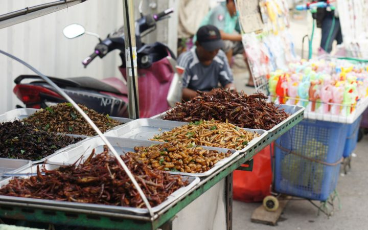 Insects on platters for sale in Thailand