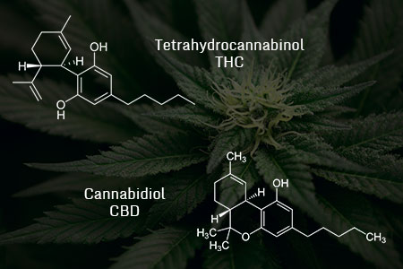 The difference between CBD and THC chemical structures