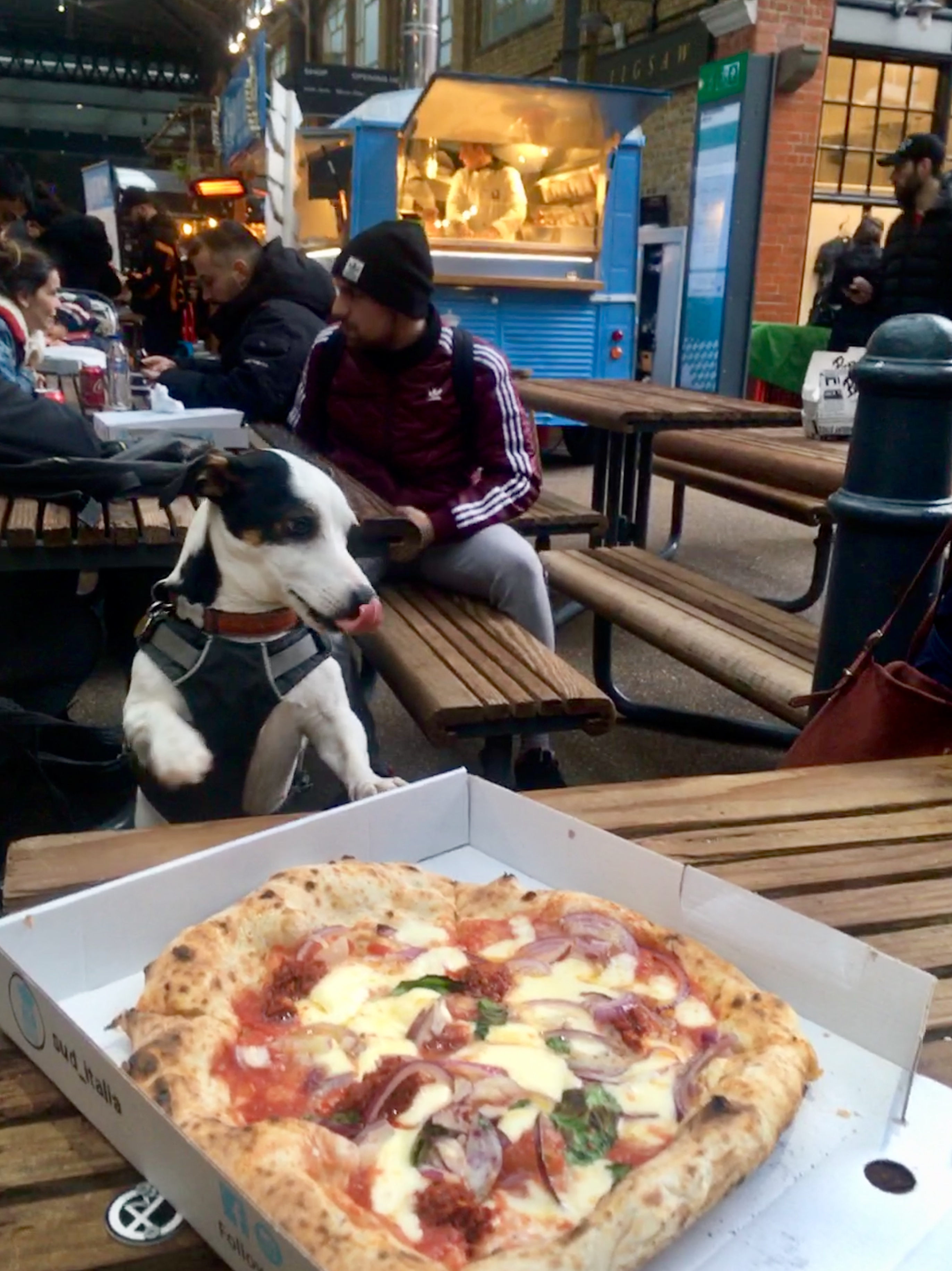 Dog licking its nose in front of a pizza