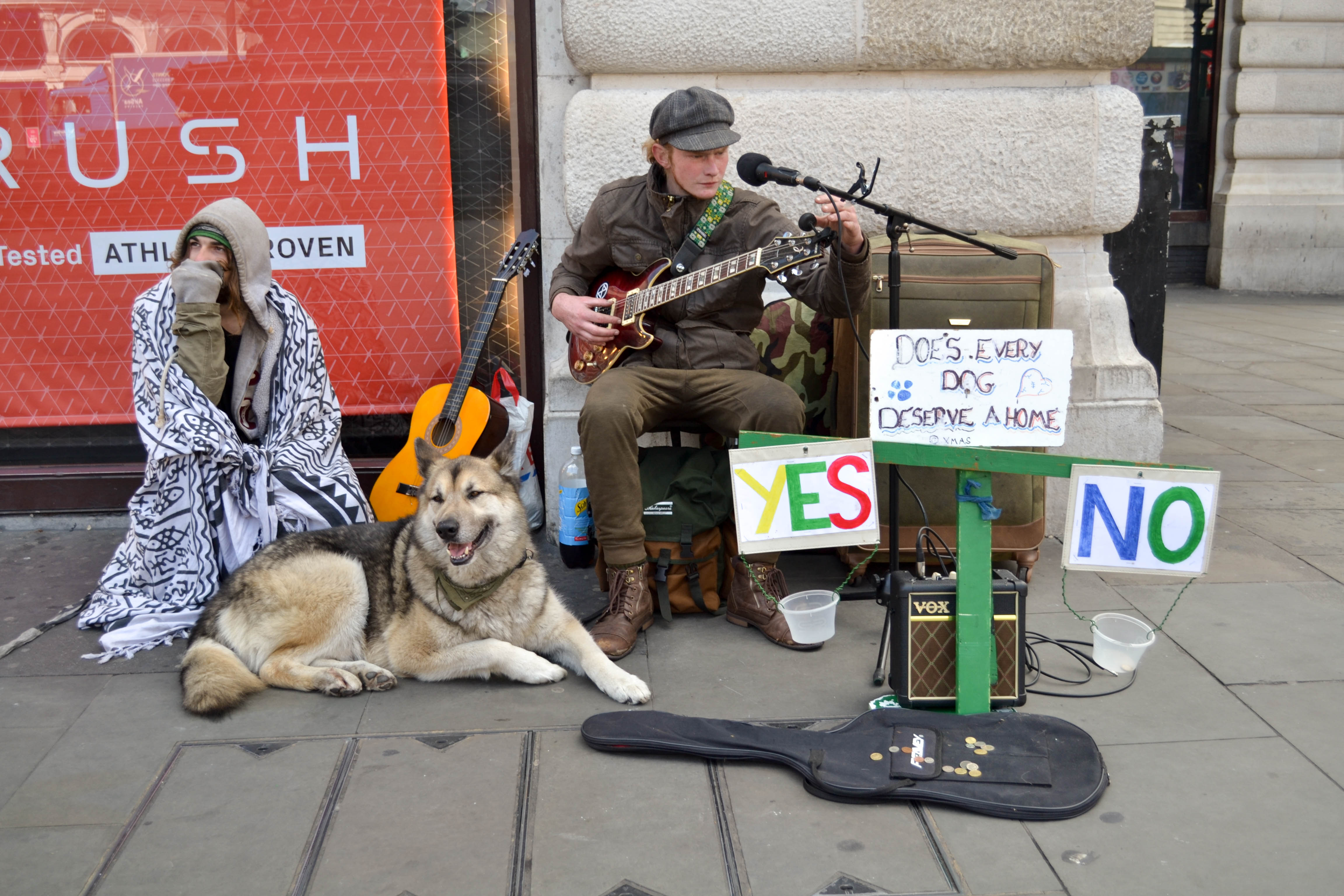 a busker with their dog and lots of instruments and signs