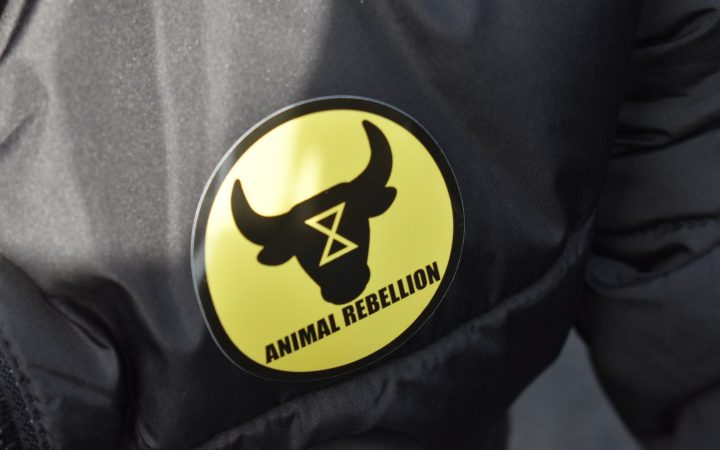 Animal Rebellion badge (featuring the silhouette of a bull with the Extinction Rebellion logo on its head) on the jacket of a protester