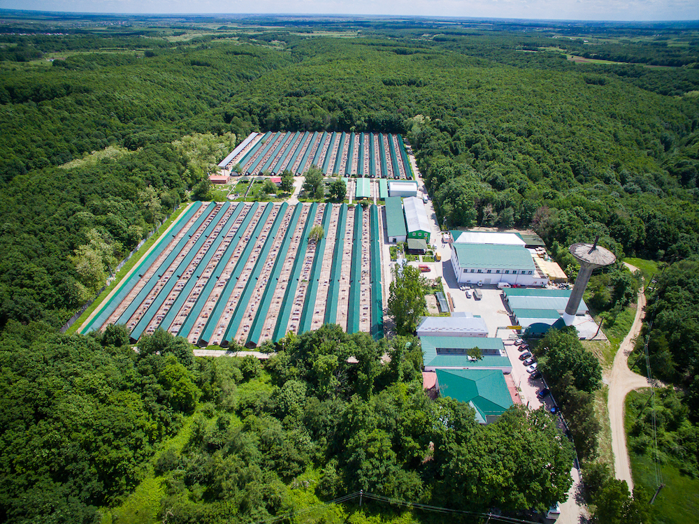 A bird's-eye-view of the animal shelter. Rows of long green roofs with dogs in between. The complex is surrounded only by a green forest.