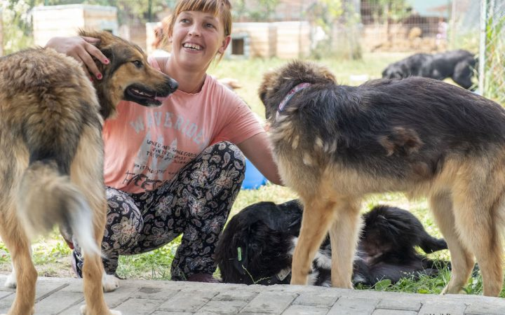 A woman kneels down to cuddle two stray dogs. She is laughing and has her two hands wrapped around the dogs heads.