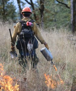 Prescribed burning in Australia