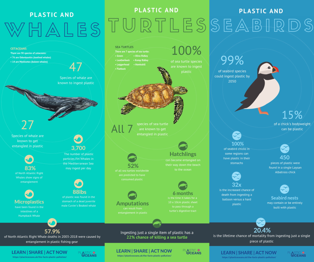 A series of infographics detailing the effects of ocean plastics on whales, turtles and seabirds respectively. Some of the main facts include: 47 species of whale are known to ingest plastic, 100% of sea turtle species are known to ingest plastic and 99% of seabird species could ingest plastic by 2050.